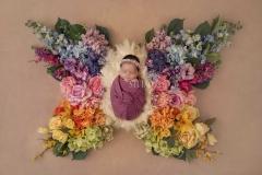 vlinderLuna-scaled
